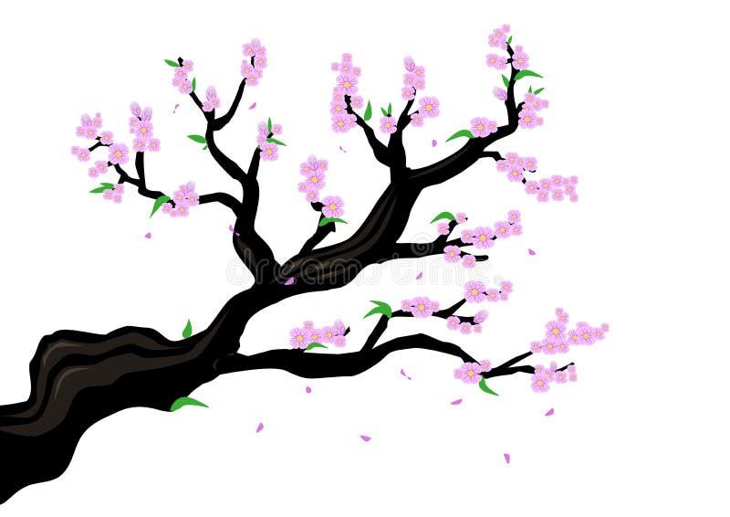 Una rama de Cherry Blossom o un género Prunus Serrulata o un ejemplo de Sakura Clip art Editable stock de ilustración