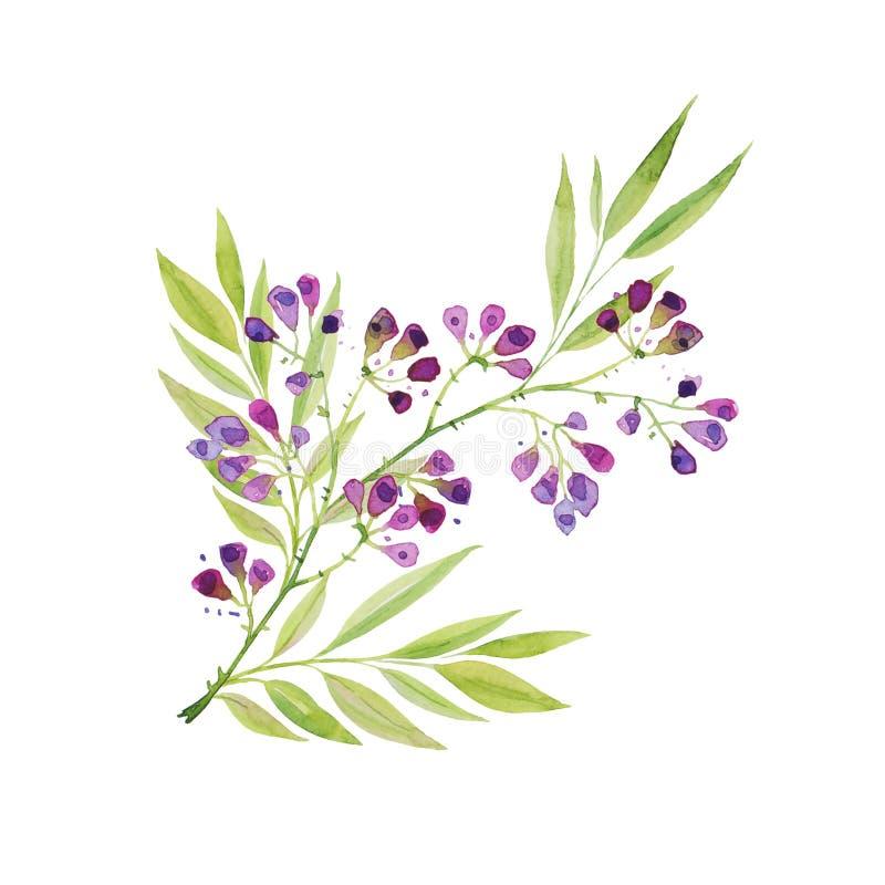 Una rama de flores púrpuras delicadas hermosas con las hojas Gráfico de la acuarela stock de ilustración