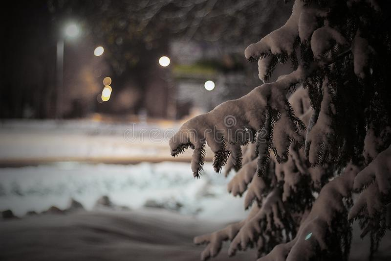 Una rama de la picea debajo de la nieve en la noche fotos de archivo