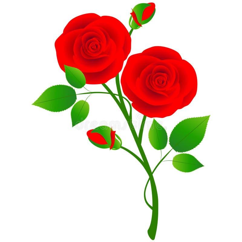 Una rama de rosas rojas con las hojas en un fondo blanco stock de ilustración