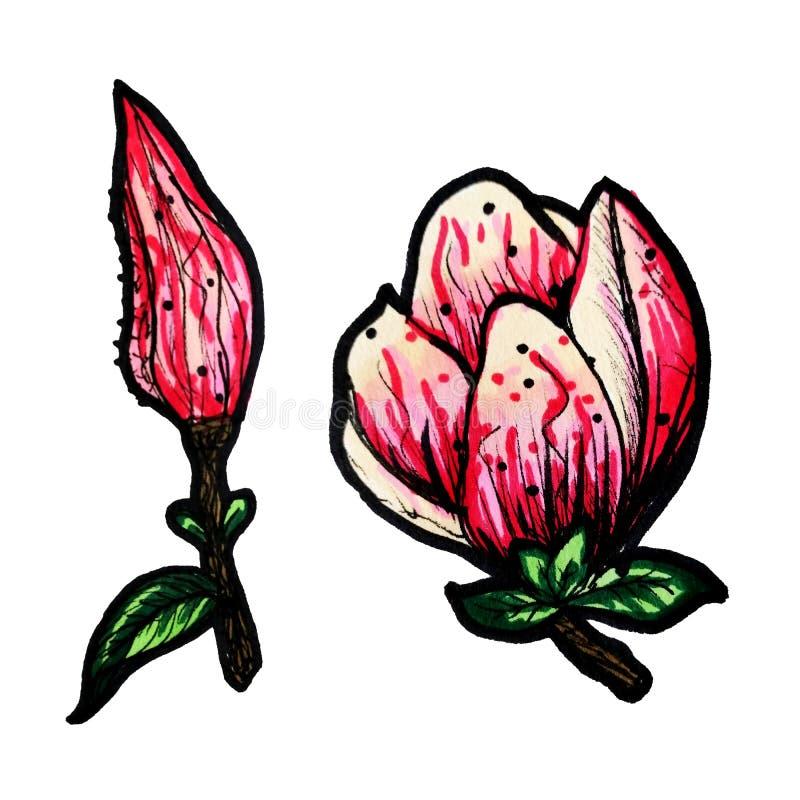 Una rama floreciente colorida de la magnolia es a mano con los marcadores Una magnolia en un fondo blanco aislado stock de ilustración