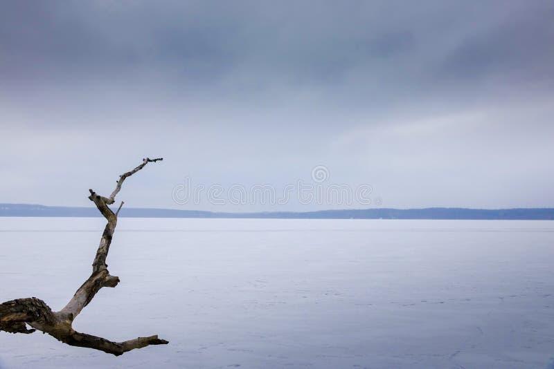 Una rama muerta cuelga hacia fuera en un lago congelado con nieve foto de archivo