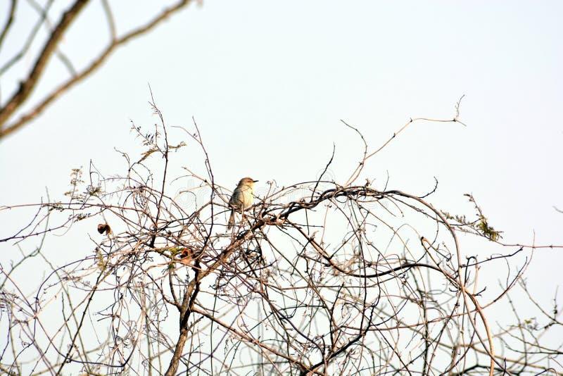Una rama que se sienta del gorrión del árbol en bosque foto de archivo libre de regalías