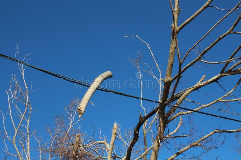 Una rama se ha integrado en una línea eléctrica cerca de Luquillo Puerto Rico después del huracán Maria imagen de archivo libre de regalías