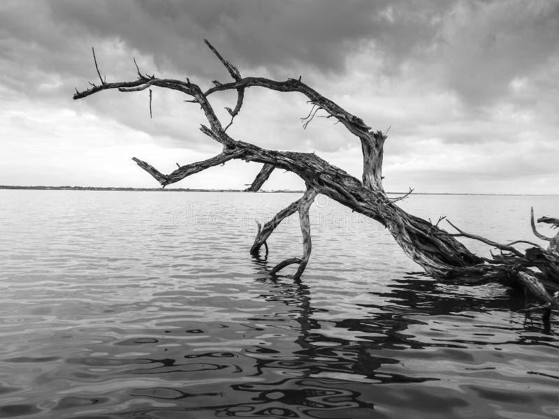 Una rama solitaria extiende en el río fotografía de archivo