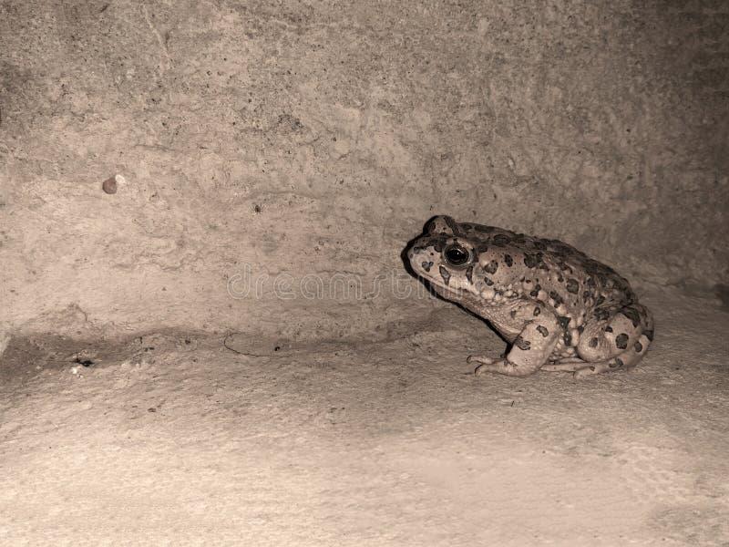 Una rana en fuera de hogar imágenes de archivo libres de regalías