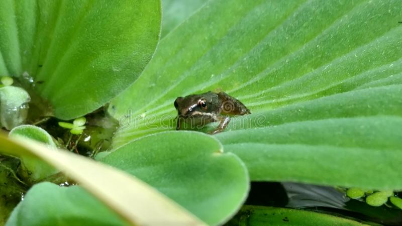 Una rana minúscula dice hola imagenes de archivo