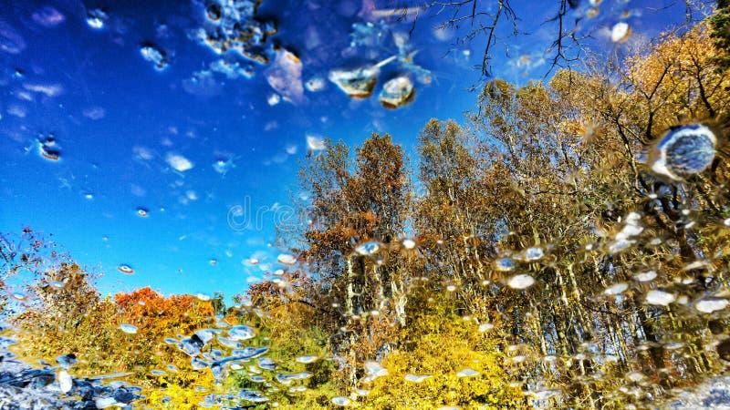 Una reflexión de árboles en un charco en el bosque fotografía de archivo