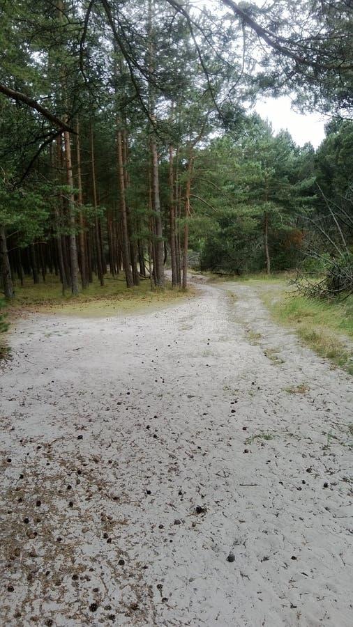 Una reserva de naturaleza protegida sobre el escupitajo de Curonian fotos de archivo libres de regalías