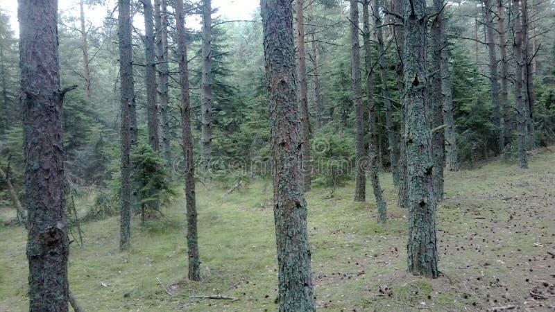 Una reserva de naturaleza protegida sobre el escupitajo de Curonian foto de archivo