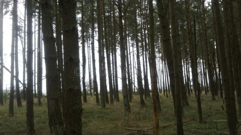 Una reserva de naturaleza protegida sobre el escupitajo de Curonian fotos de archivo