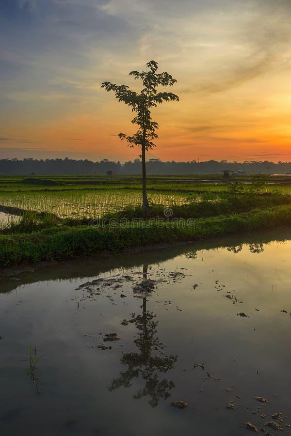 Una riflessione di un albero in Java centrale Indonesia immagine stock libera da diritti