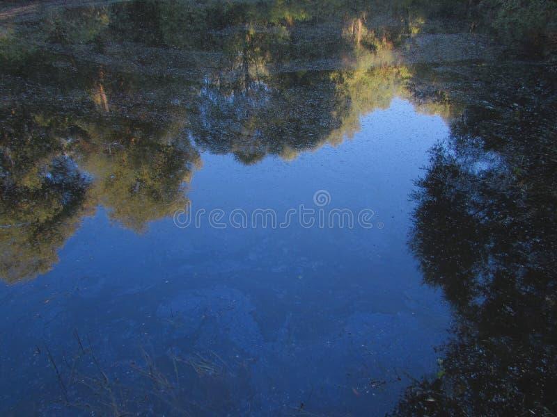Una riflessione viva del cielo blu della radura di estate nell'acqua scura sporca di un lago della foresta immagini stock