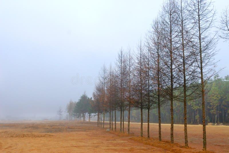 Una riga dell'albero immagine stock libera da diritti