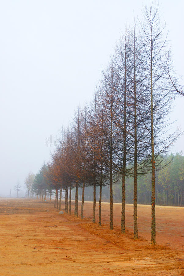 Una riga dell'albero fotografie stock