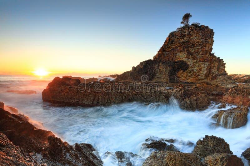 Una roccia dell'albero fotografia stock libera da diritti