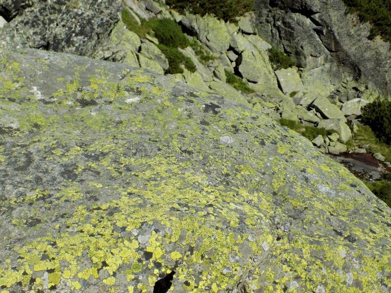Una roccia enorme con un muschio interessante. fotografia stock libera da diritti