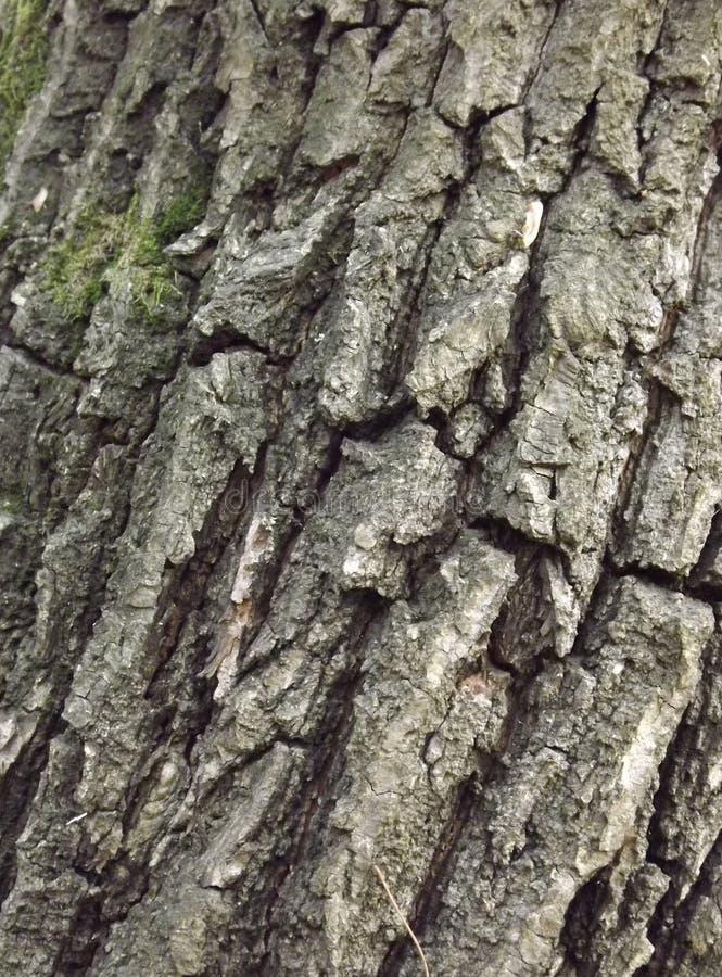 Una roccia o una corteccia fotografia stock libera da diritti