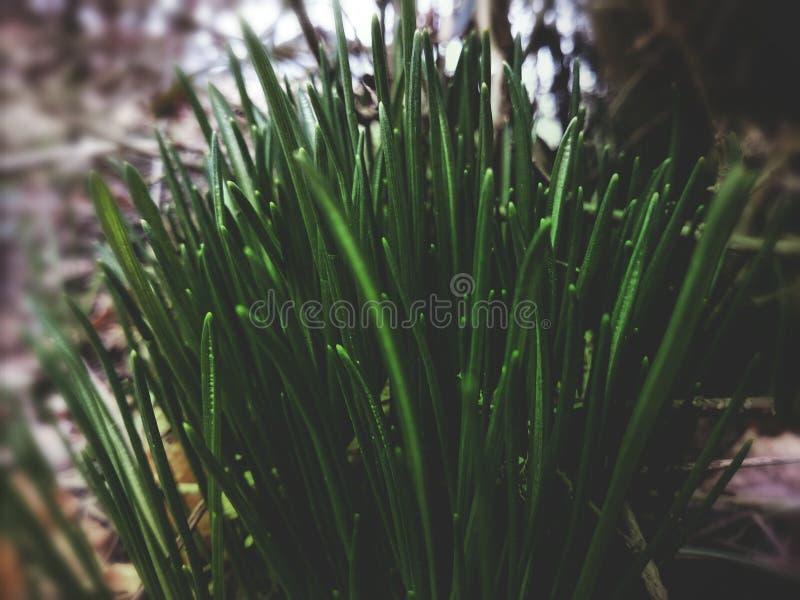 Una rociada del verde fotos de archivo