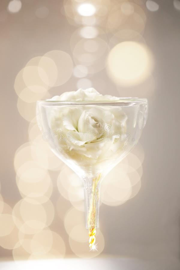 Una rosa blanca en el embudo de cristal imagen de archivo libre de regalías