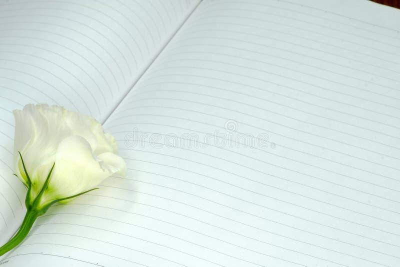 una rosa blanca en un cuaderno abierto fotos de archivo libres de regalías