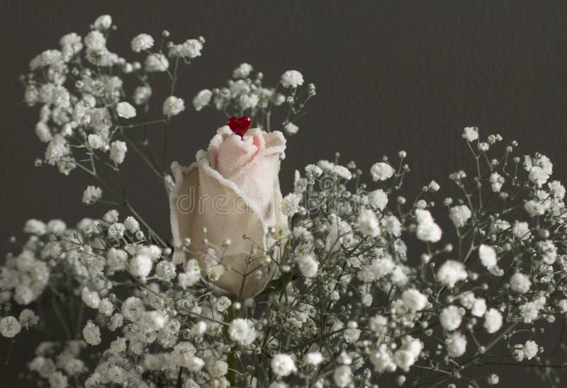 Una rosa con poco corazón rojo fotos de archivo