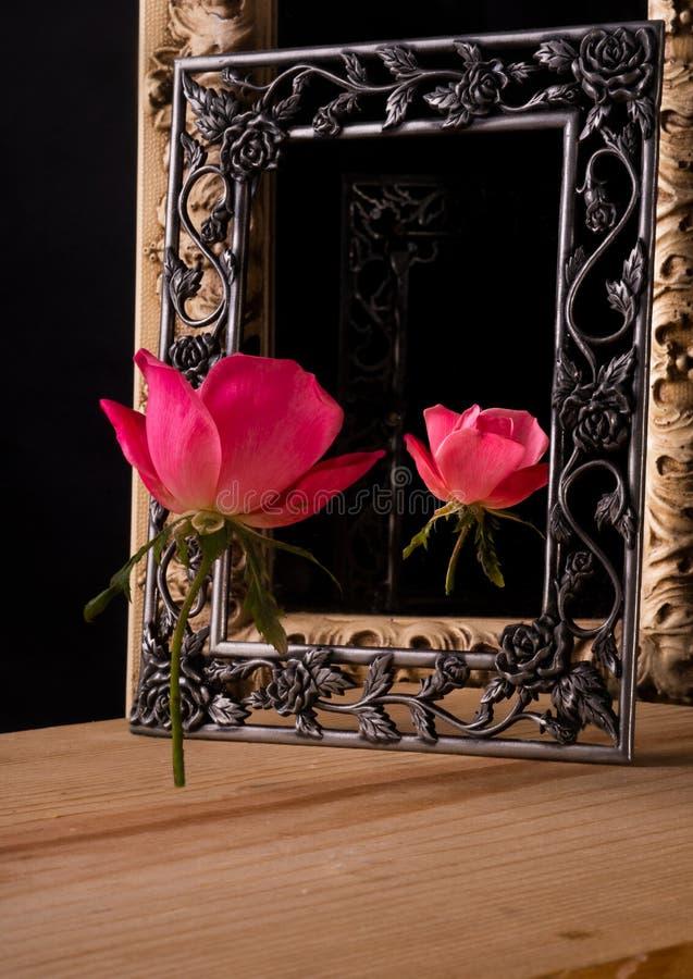 Una rosa rosa e la sua riflessione sono incorniciate fotografia stock libera da diritti