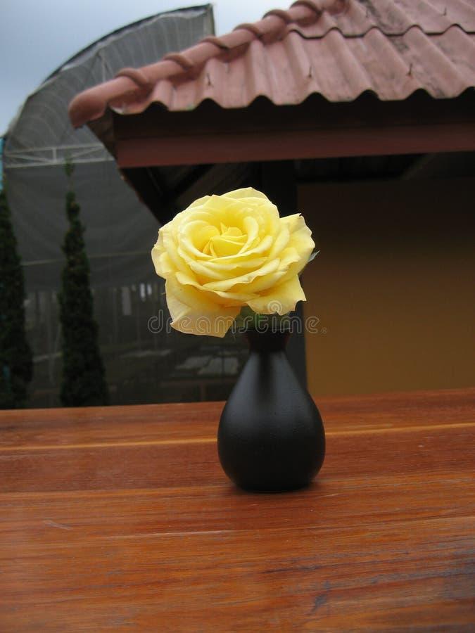 Una rosa gialla in vaso fotografia stock