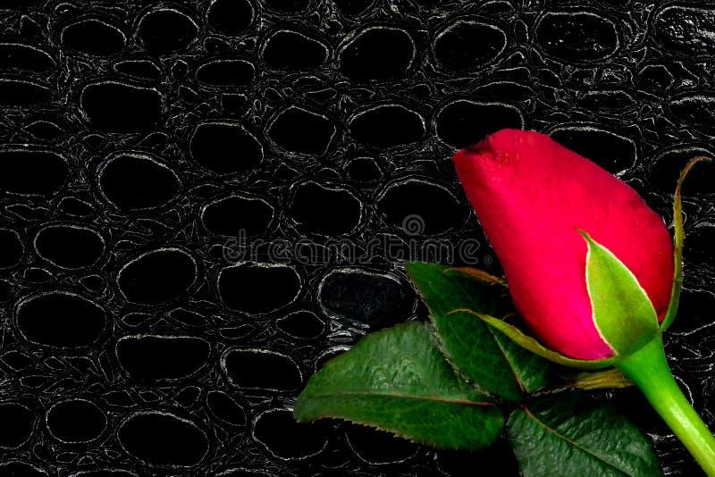 una rosa roja y un cuaderno fotografía de archivo