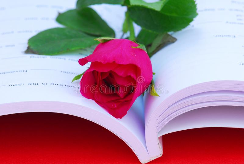 Una rosa rossa sul libro bianco quando un giorno del ` del biglietto di S. Valentino immagini stock