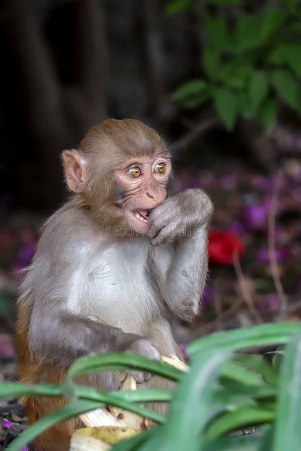 Una scimmia del bambino che morde la sua mano fotografia stock