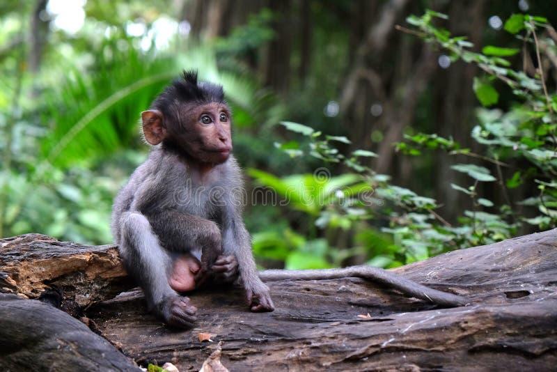 Una scimmia del bambino che si siede su un ceppo fotografia stock