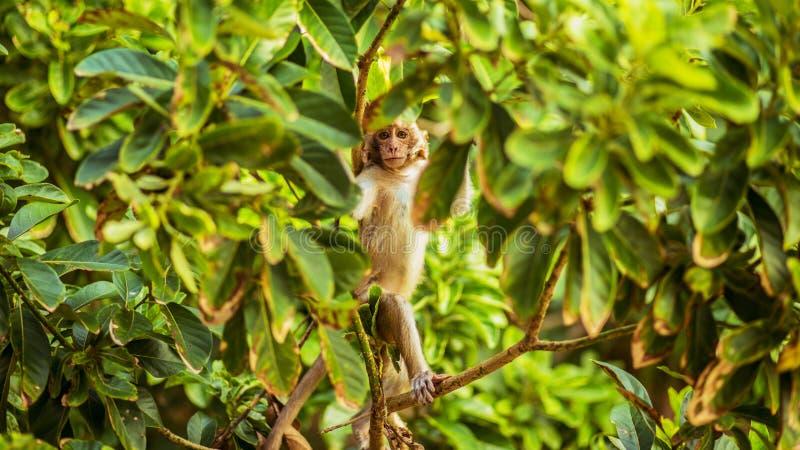 Una scimmia del bambino nell'isola della scimmia fotografie stock libere da diritti