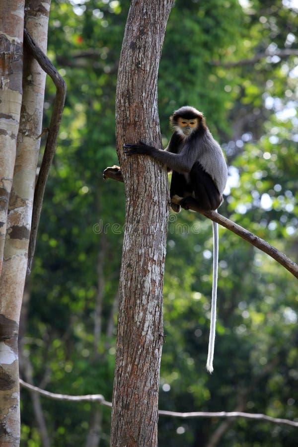 Una scimmia su un albero in uno zoo fotografie stock libere da diritti
