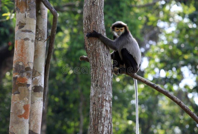 Una scimmia su un albero in uno zoo fotografia stock