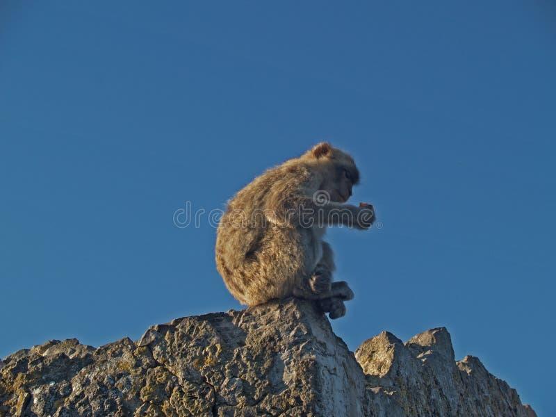 Una scimmia sulla roccia fotografie stock