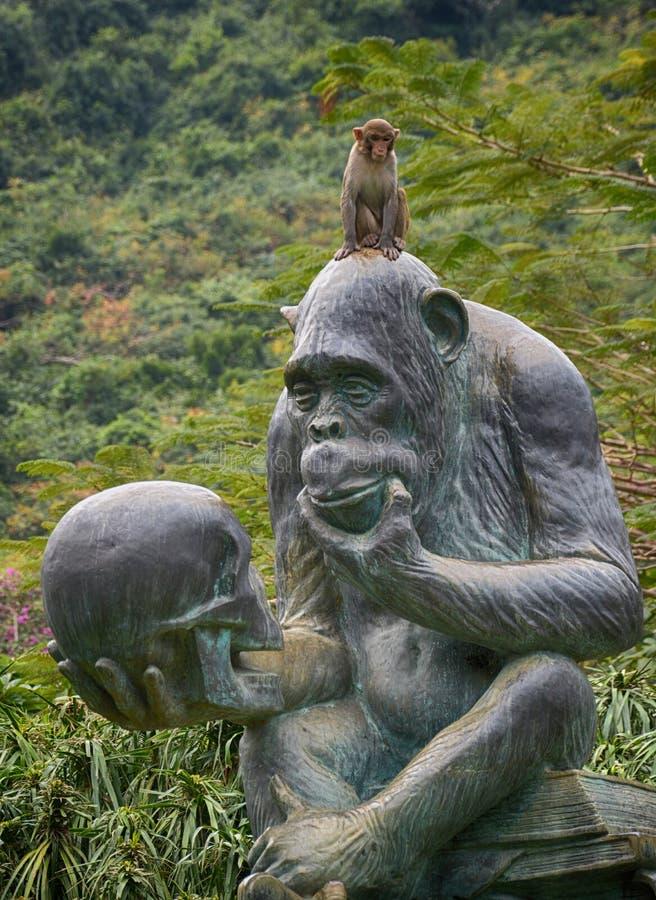 una scimmia vivente selvaggia sulla testa di una scimmia di pietra immagini stock