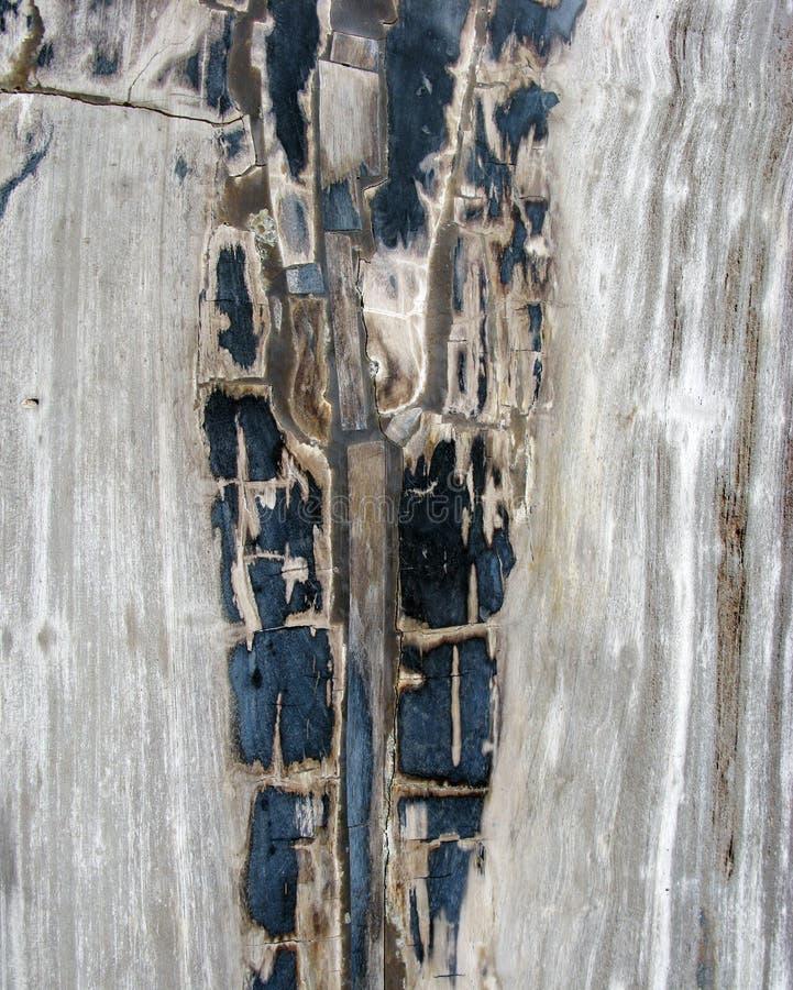 Una sección del corte de la cruz de la madera de Fosillized imagen de archivo
