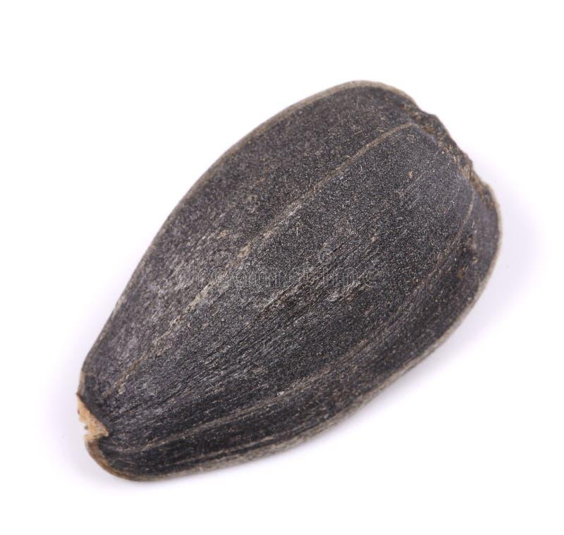 Una semilla de girasol fotografía de archivo libre de regalías