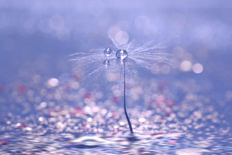 Una semilla del diente de león con descensos de subió en un fondo azul con un bokeh Macro hermosa del abstraktnoe fotos de archivo