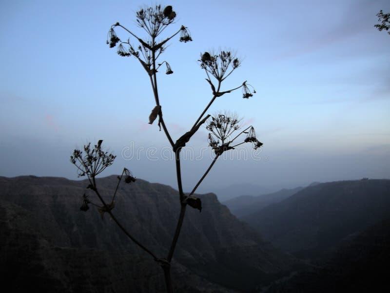 Una sera in Etiopia fotografia stock