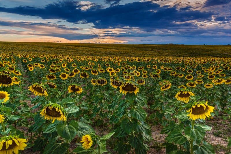 Una sera pigra di estate in Colorado fotografia stock