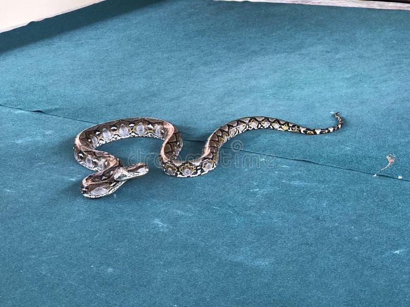 Una serpiente grande foto de archivo