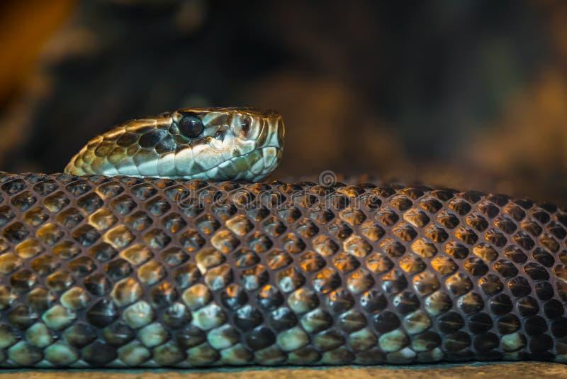 Una serpiente que se arrastra imagen de archivo