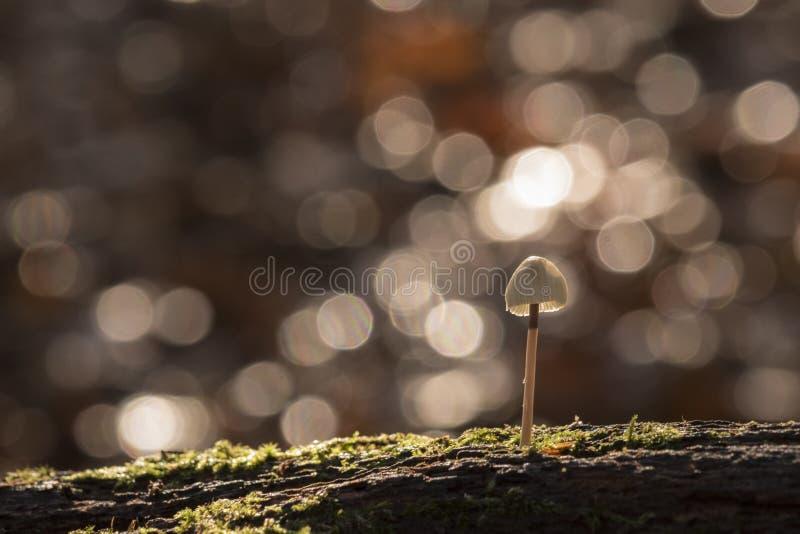 Una seta minúscula en la luz del sol fotos de archivo libres de regalías