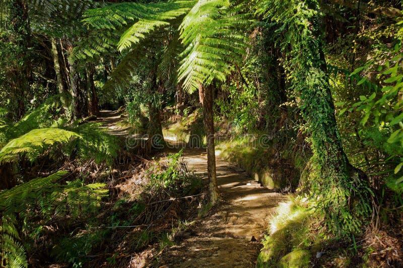 Una sezione di Abel Tasman Coastal Track fotografia stock
