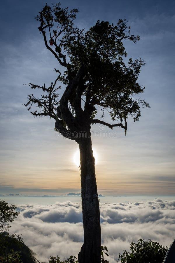 Una silueta del árbol con puesta del sol colorida o el cielo de la salida del sol en el sitio para acampar 7 Raung es el más desa imagenes de archivo