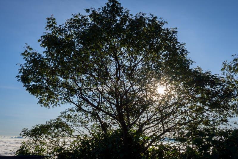 Una silueta del árbol con puesta del sol colorida o el cielo de la salida del sol en el sitio para acampar 7 Raung es el más desa fotografía de archivo