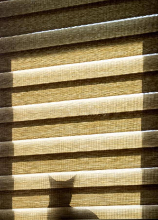 Una silueta del gato detrás de la cortina en la ventana imagen de archivo