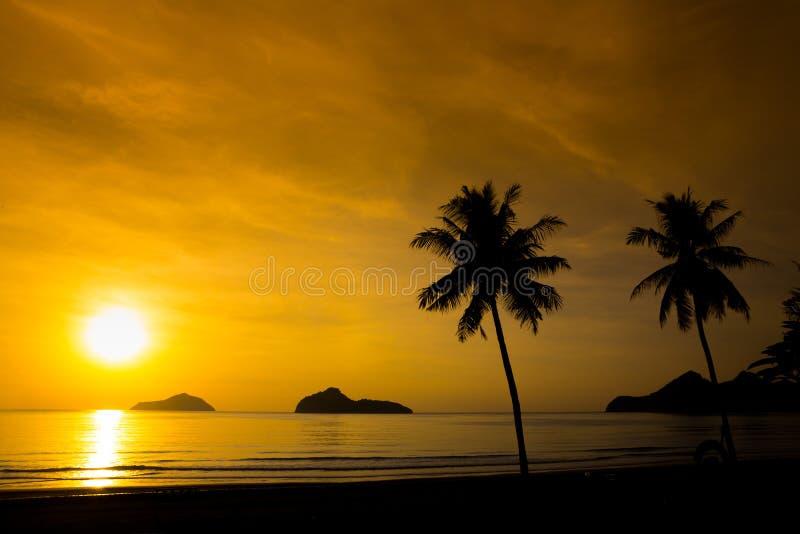 Una siluetta di due palme sul tramonto fotografia stock